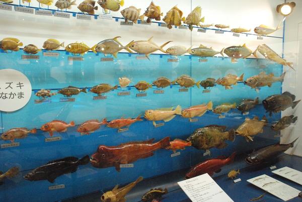 日本一の魚の剥製水族館 (17)