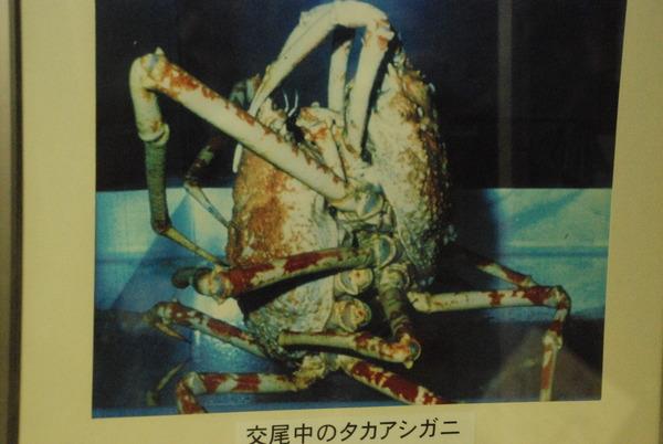 戸田造船資料館 (10)