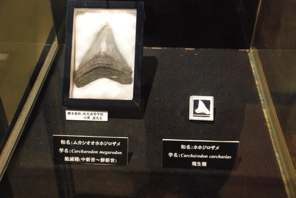京急油壺マリンパーク (27)