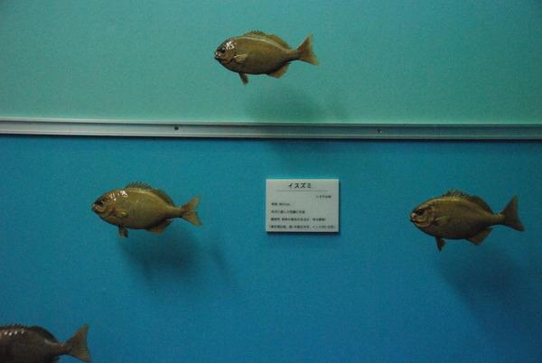 海の文化館 (8)