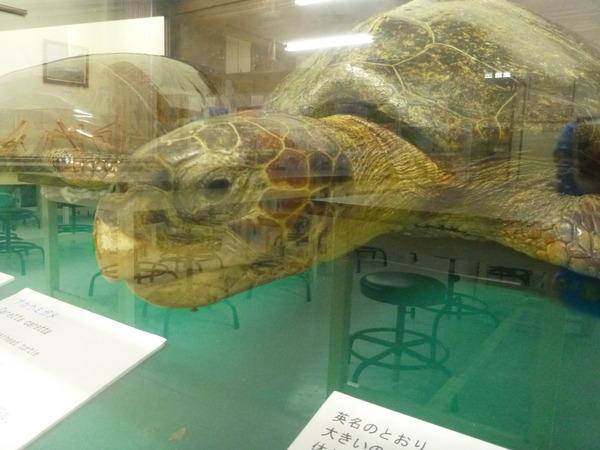 東京海洋大学 水産資料館 (62)