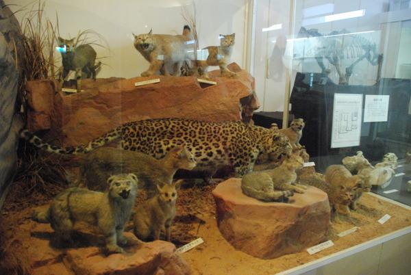 猫の博物館 (10)