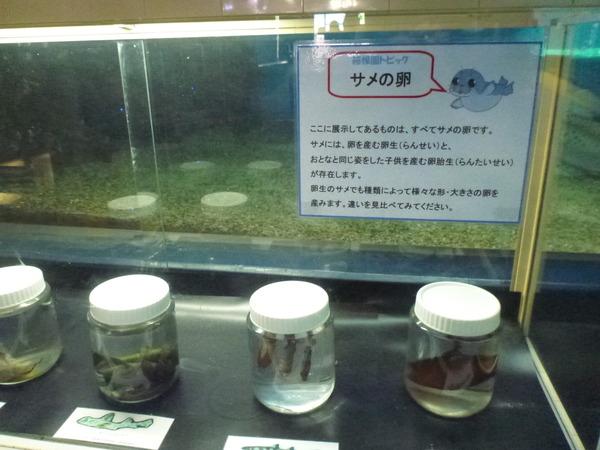 箱根園水族館 (4)