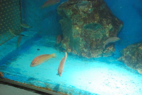 桂浜水族館 (19)