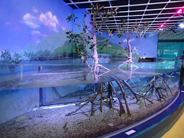 箱根園水族館 (103)