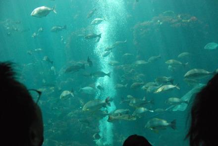 下田海中水族館 (21)