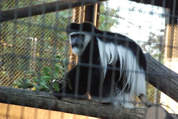 野毛山動物園 (17)