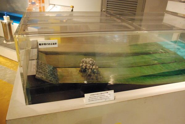 東海大海洋生物博物館 (34)