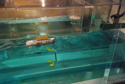 東海大海洋生物博物館 (31)