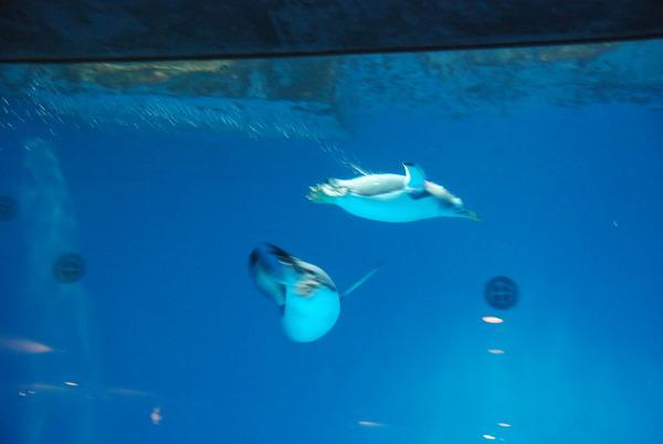 長崎ペンギン水族館 (3)