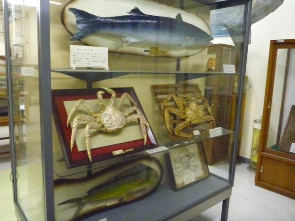 東京海洋大学 水産資料館 (76)