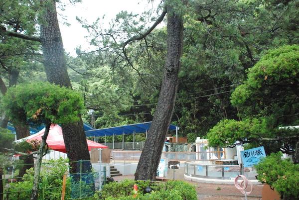 桂浜水族館 (70)