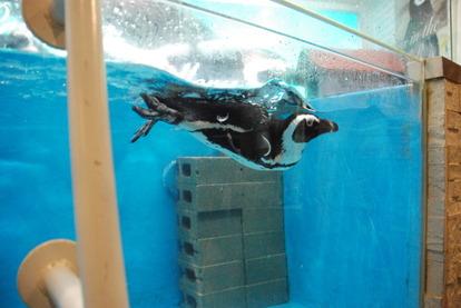 ペンギンのいるBAR (12)