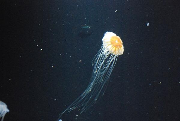 加茂水族館 (18)