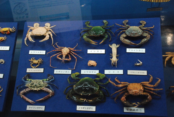 日本一の魚の剥製水族館 (14)