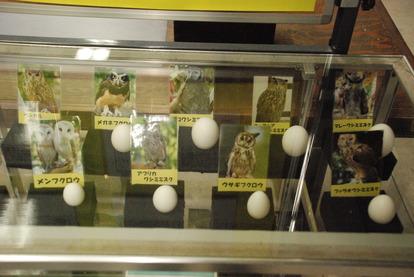 掛川花鳥園 (8)