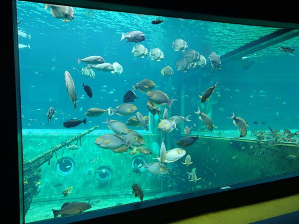 箱根園水族館 (110)