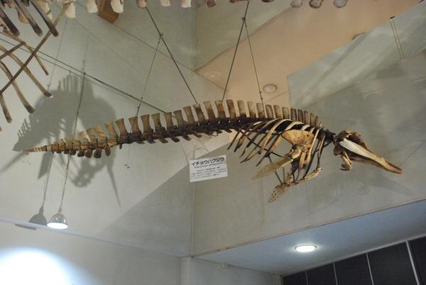 くじら博物館 (3)