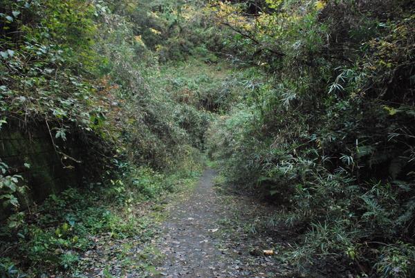 畑トンネル (7)