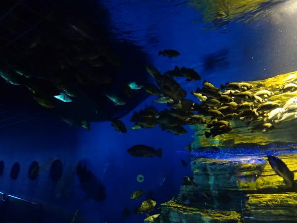 箱根園水族館 (115)