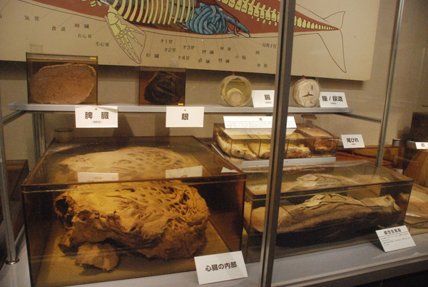 くじら博物館 (31)