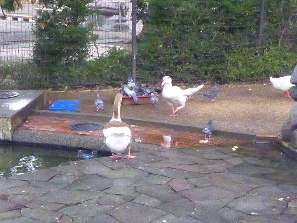 平塚市ふれあい動物園 (21)