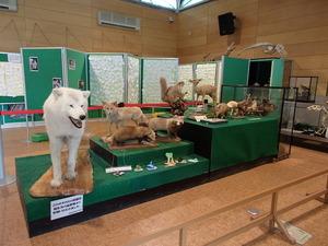 羽村動物園 (131)