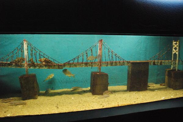 新屋島水族館 (25)