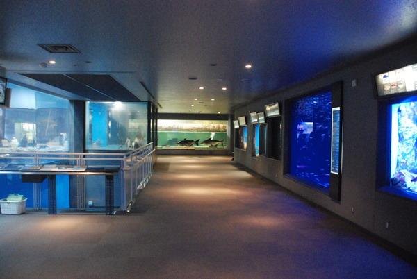長崎ペンギン水族館 (6)