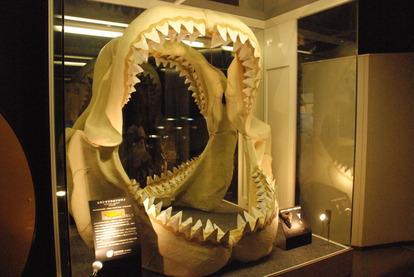 カブトガニ博物館 (22)