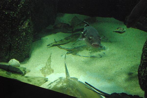 加茂水族館 (4)