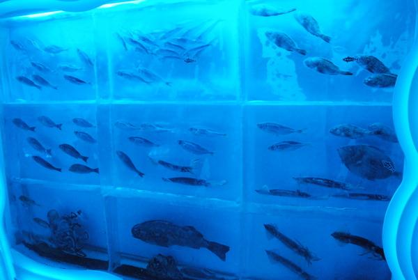 氷の水族館 (14)