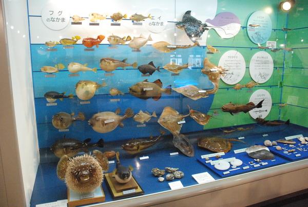 日本一の魚の剥製水族館 (18)