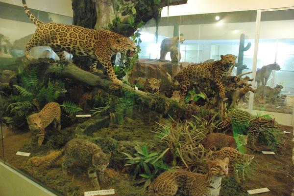 猫の博物館 (9)