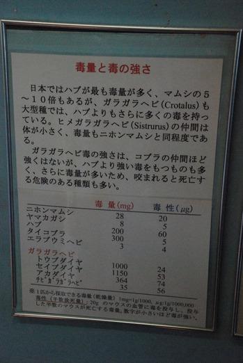 ジャパンスネークセンター (28)