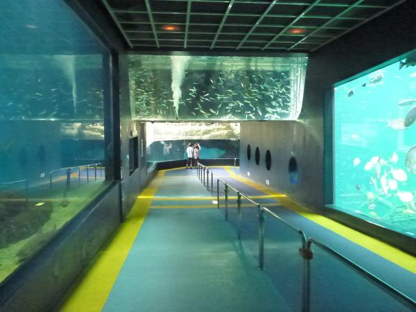 箱根園水族館 (8)