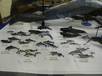 東京海洋大学 水産資料館 (15)