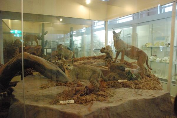 猫の博物館 (17)