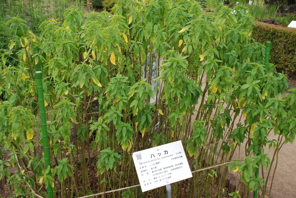 東京都薬用植物園 (4)