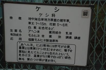 東京都薬用植物園 (9)