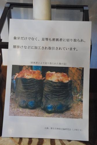 横浜税関展示室 (19)