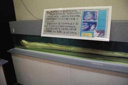 桂浜水族館 (57)