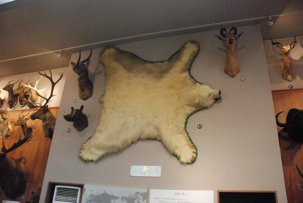 滋賀サファリ博物館 (9)