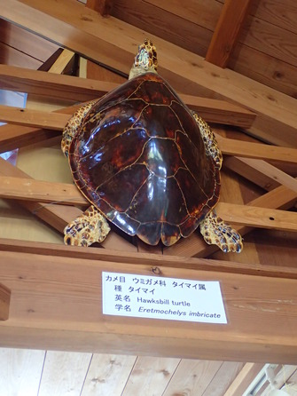 道の駅 紀宝町ウミガメ公園 (16)