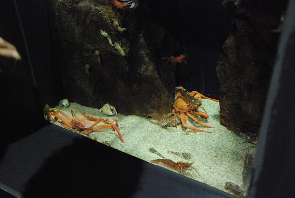 加茂水族館 (12)