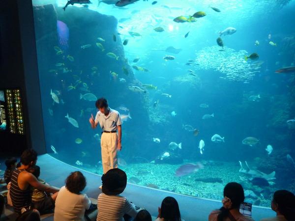 江ノ島水族館 (40)