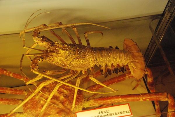 山梨県立富士湧水の里水族館 (32)
