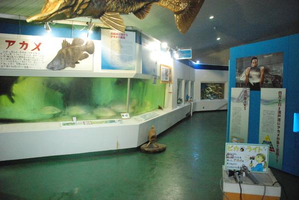 桂浜水族館 (8)