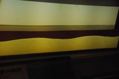 東海大海洋生物博物館 (7)