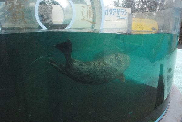 新屋島水族館 (44)
